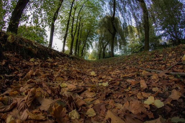 Gracht park van Eeklo herfst