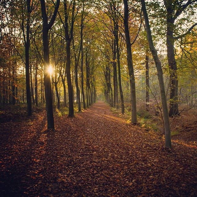 Fallen leaves ???????? #eeklo #autumn #sunset #nature #trees